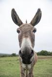 funny donkey face