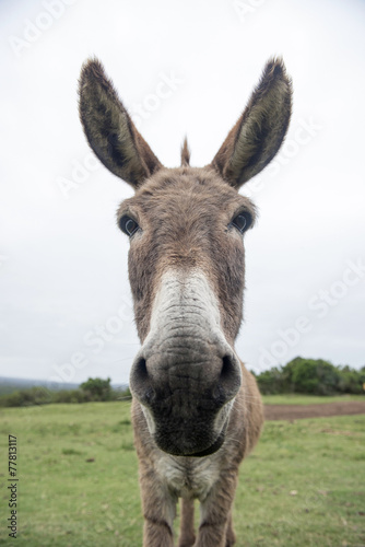 Fotobehang Ezel funny donkey face