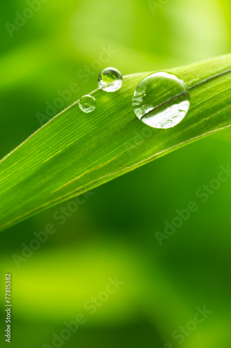 leaf with rain droplets - Stock Image - 77815382