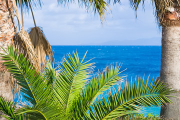 tropical plants with blue sea in the background