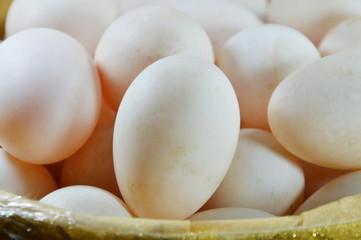 duck egg in basket