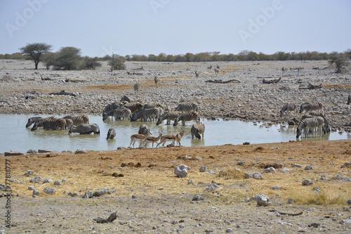 In de dag Antilope Waterhole, Okaukuejo, Etosha Nationalpark, Namibia, Africa