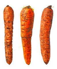 Three dirty carrots on white background