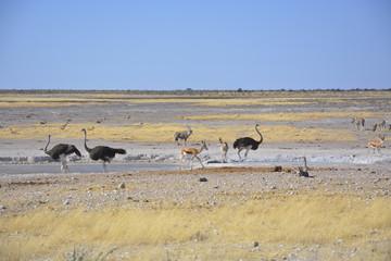 Wildlife at Waterhole, Etosha, Namibia, Africa