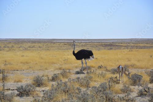 Fotobehang Struisvogel Wildlife at Waterhole, Etosha, Namibia, Africa