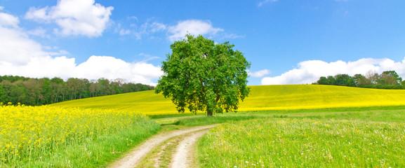 Feldweg im Frühling - Bodenseeregion