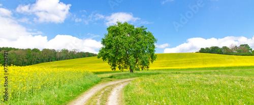 Leinwandbild Motiv Feldweg im Frühling - Bodenseeregion