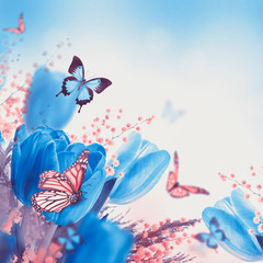 Blue tulips with mimosa and butterfly, spring background