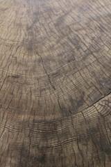 Jahresringe am gefällten Baum