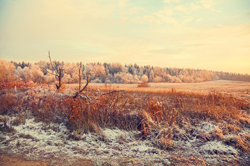 Country winter landscape. Dry grass, forest, snow