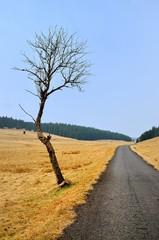 Baum neben der Straße im Erzgebirge