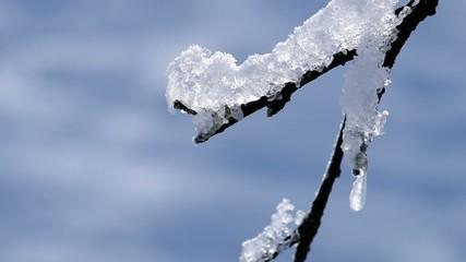 Frost on a tree branch in winter