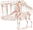 legendary animals and monsters: CENTAUR