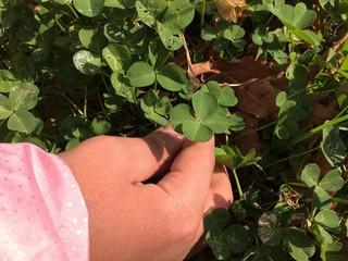 niña cogiendo trebol de cuatro hojas de un campo