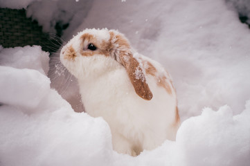 white and brown rabbit in snow