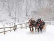 Horse pulled sledge in the Transylvanian Alps - 77842747