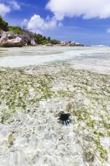 Sea Urchin In Lagoon, La Digue, Seychelles