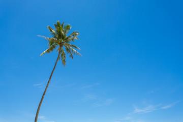 Cocotier et ciel bleu
