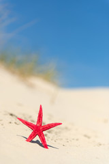 Starfish in sand