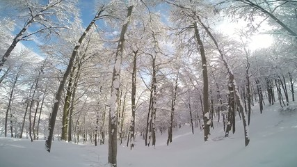 Skiing downhill in a snowy forest.