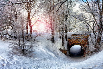 Morning In Snowy Forest
