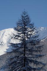 albero con neve e montagne