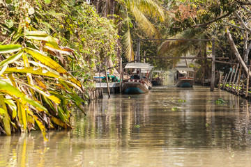 Longtail boats in the jungle