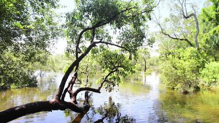 Fresh water source Myora Springs on Stradbroke Island, Australia