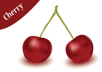 cherry vector in white background, cherry vector