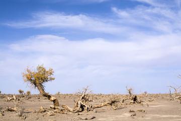 Dead Trees in the desert, Ejina, Inner Mongolia, China