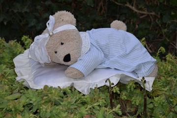 Was born a teddy bear!