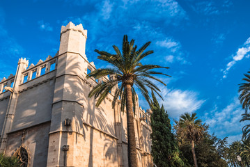 Tall Palm Tree Beside Mediterranean Building Palma de Majorca