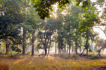 Mist and trees at dawn in Bandhavgarh National Park, India