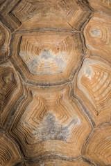 Turtle shell in Gan Hai Petah Tikva
