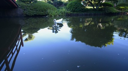 The Japanese Gardens with wild birds in Toowoomba, QLD.