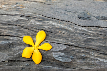 yellow flower on dark wood
