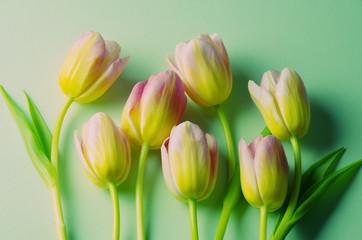 sieben Tulpen vor hellgrünem Hintergrund