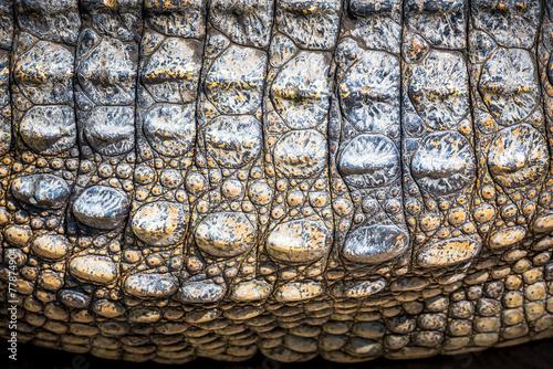 Canvas Krokodil Crocodile leather