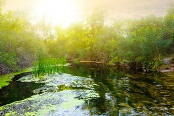 evening summer river scene