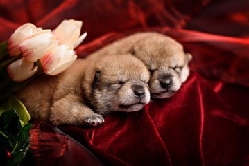 Cute newborn puppy with berries and flowers