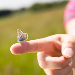 close-up von Finger mit Schmetterling