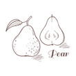 Vector illustration of engraving pear