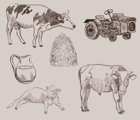 cows. farm animals. vector sketches