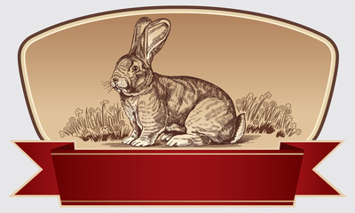 Graphic rabbit