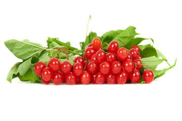 Bunch of red berries- guelder rose