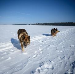 Aktive Hunde im Winterurlaub