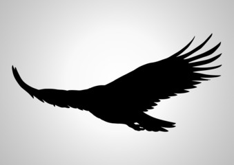 Silhouette illustration of a soaring eagle