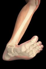 Piede ossa radiografia gamba