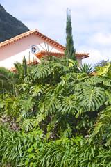 Visiting Madeira: Interesting Plants.