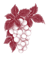 Vector illustration, graphic design - bunch of grapes